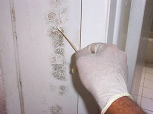 Household Mold Inspection Rhode Island
